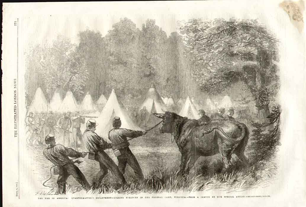 [Print Civil War 1861 Killing Bullocks Federal Camp Virginia 1861 A271A176 Old Original]