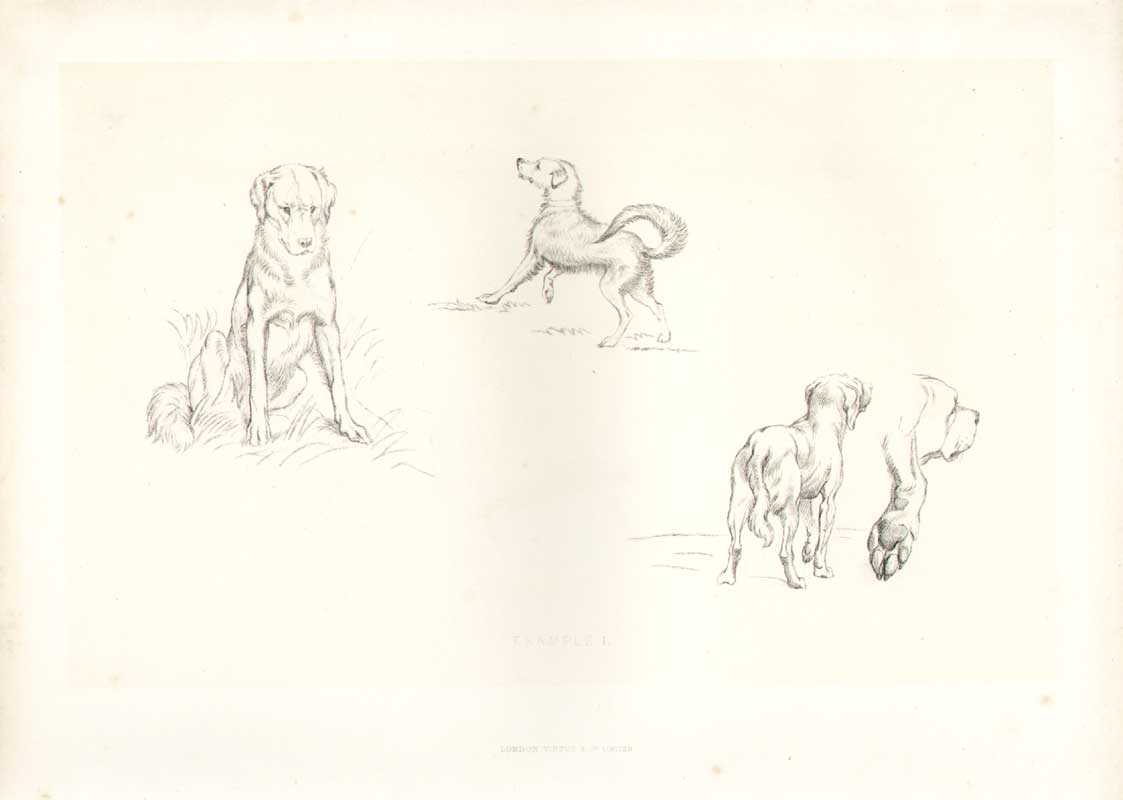 [Print Landseer Works Example I Dogs 045A308 Old Original]