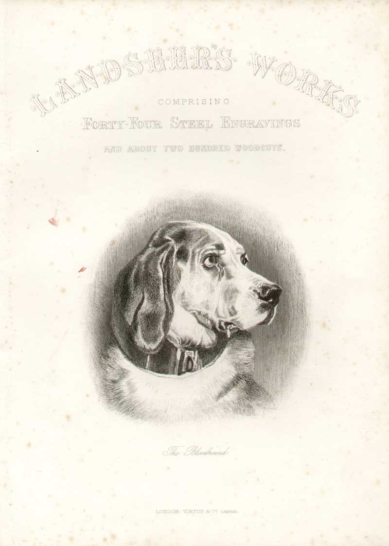 [Print Landseer Works Frontispiece Bloodhound 055A308 Old Original]