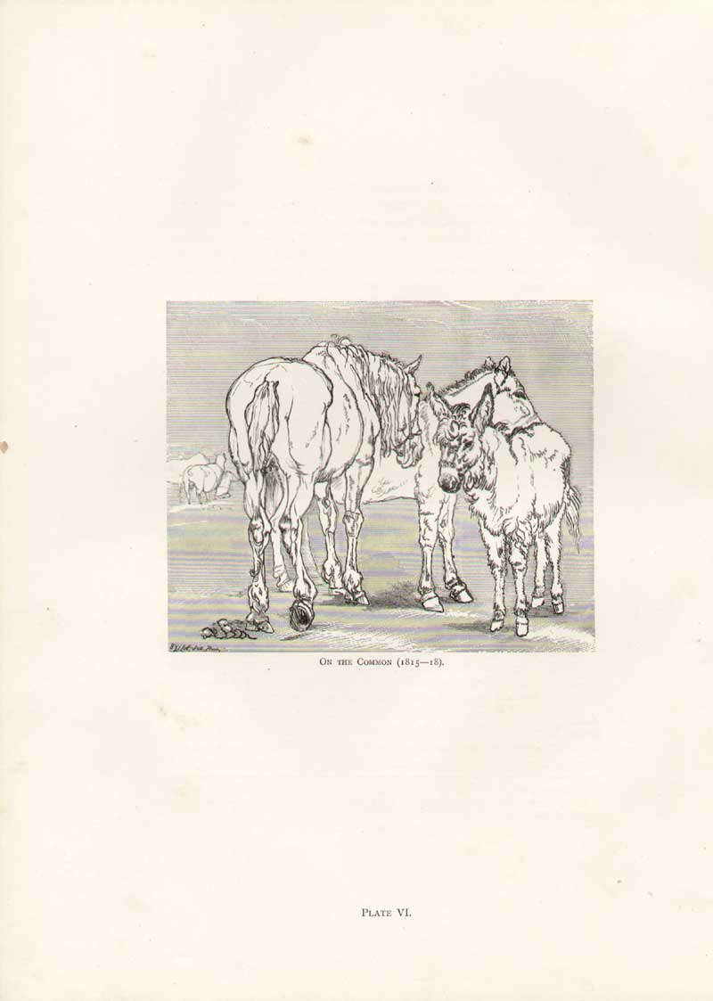 [Print Landseer Pl 6.. Horses On The Common 1815-18 061A308 Old Original]