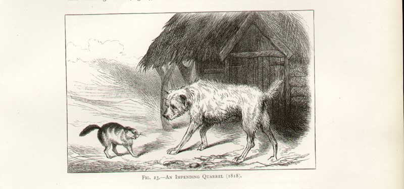 [Print Landseer Sketch Dog Cat An Impending Quarrel 1A27A308 Old Original]