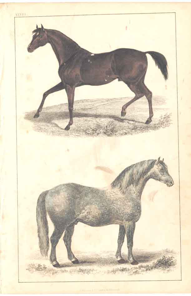 [Print H/C 1852 Goldsmith Race Horse Cart Horse 2048A341 Old Original]