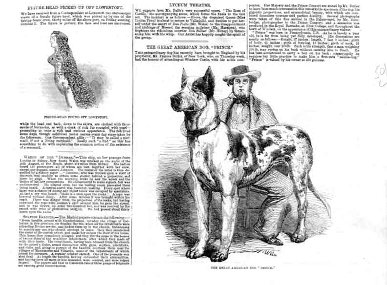 [Print Great American Dog Prince 1857 501La376 Old Original]