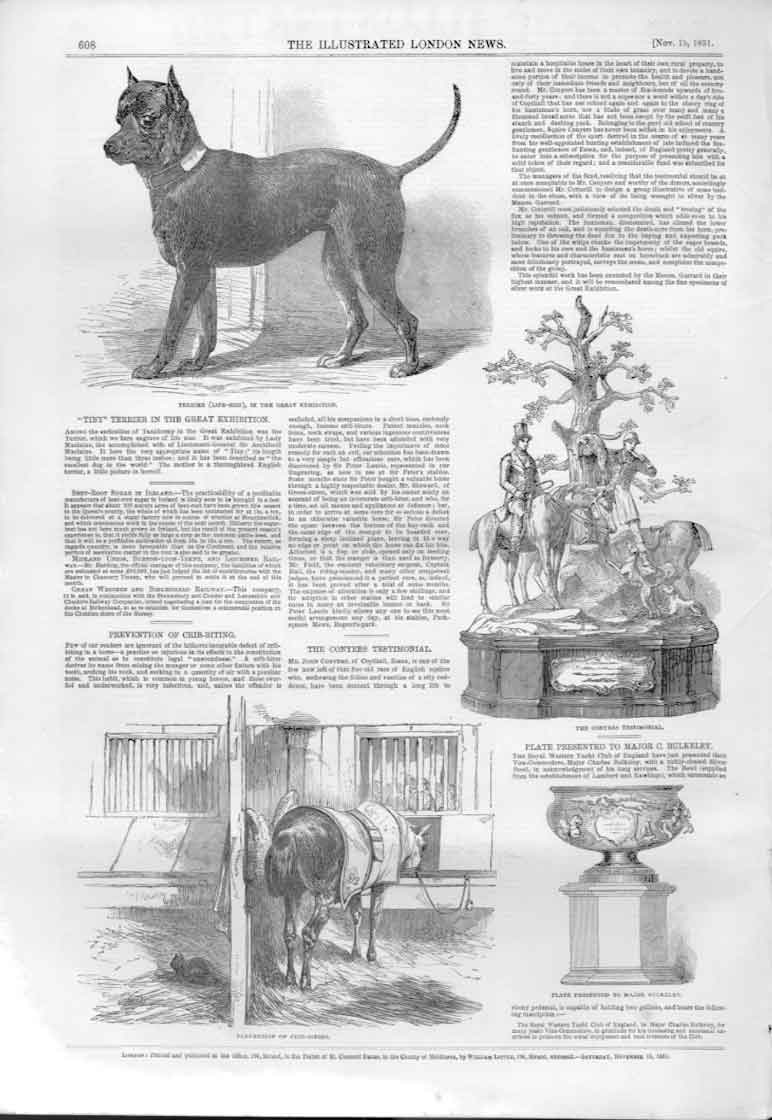[Print Life Size Terrier Dog In Breat Exhibition 1851 608A476 Old Original]