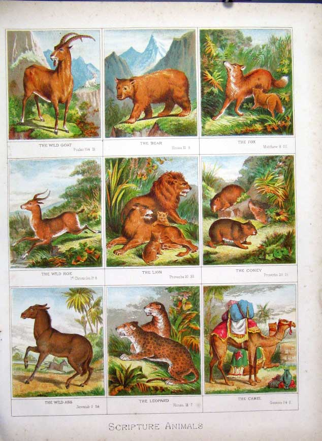 [Print Scripture Animals X 9 Browns Family Bible 1877 105501 Old Original]