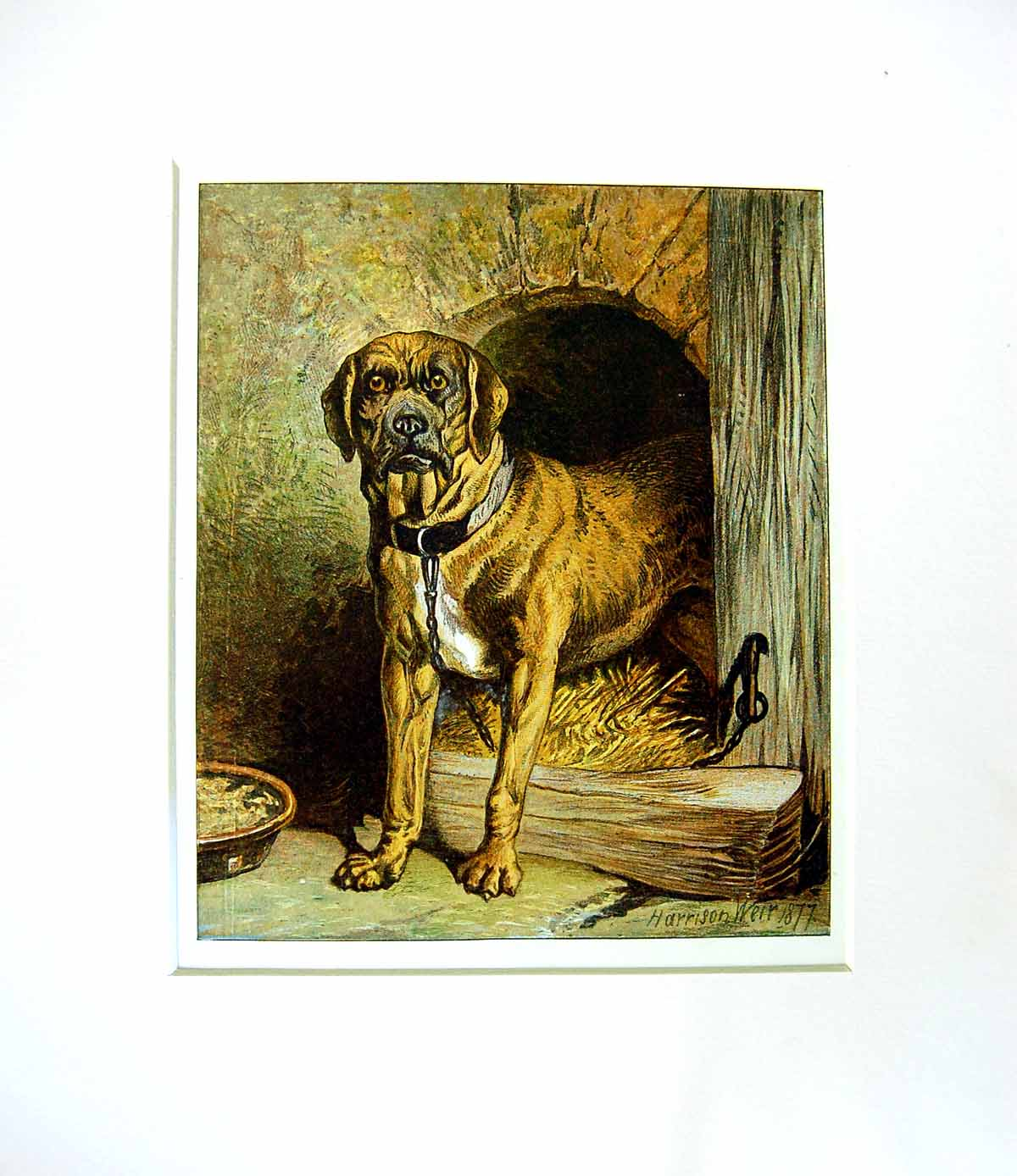 [Print Harrison Weir 1877 Mounted Dog Outstanding ! 103552 Old Original]