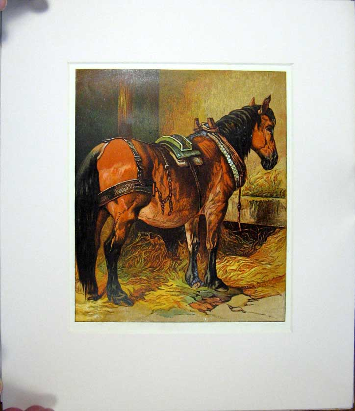 [Print Harrison Weir 1877 Mounted Horse Outstanding ! 045521 Old Original]