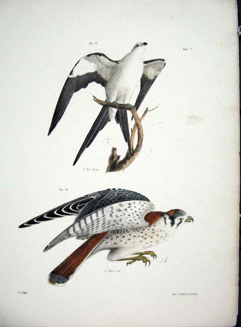 [Print Hill New York C1842 Hawks Plate 7 115611 Old Original]