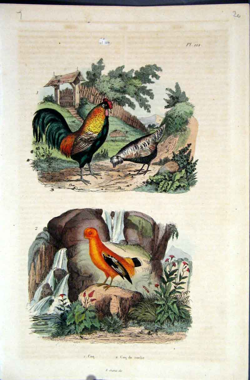 [Print Poultry 1839 H/C Natural History By Baron Fries*122 205881 Old Original]