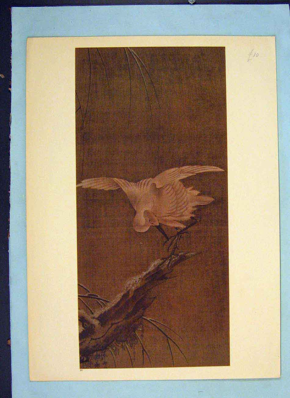 Print Bird Perched Color Fine Art Eastern 796041 Old Original