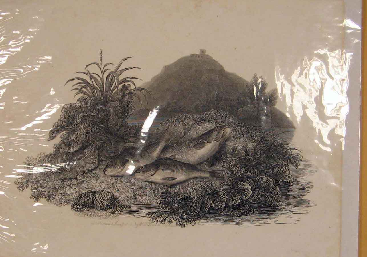 [Print 1840Daniels Lavelseer Plate Fish River Bank C1840 086151 Old Original]