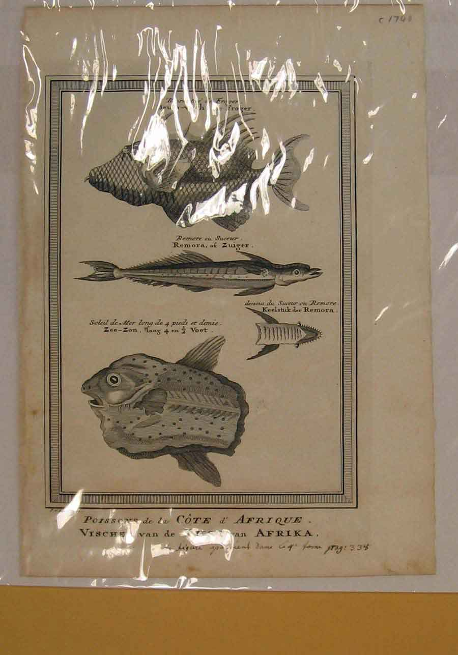 [Print Fish Fishes Africa Cost Fine Art C1740 146151 Old Original]