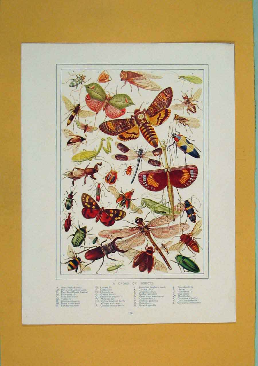 Print Group Insects Color Fine Art C1910 486311 Old Original