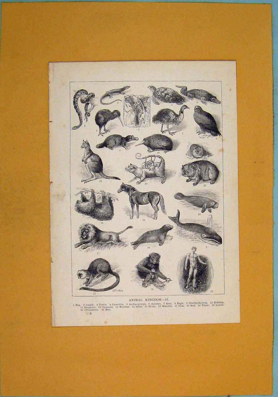 Print Animal Kingdom Lizard Crocofile Emu Egale Lion Horse 196341 Old Original