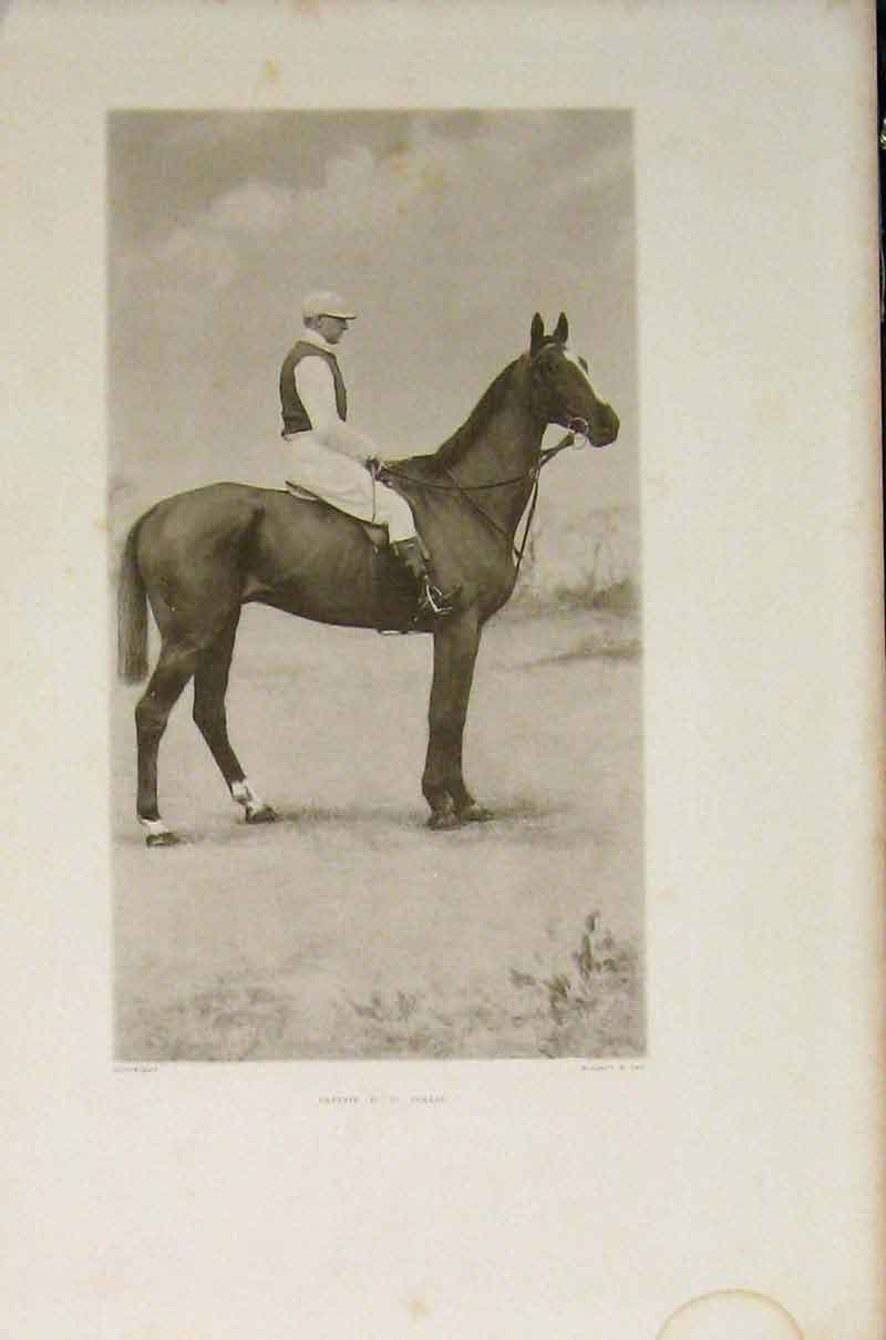 Print Captain Collis Portrait Horse Riding Editorial Sport 416391 Old Original