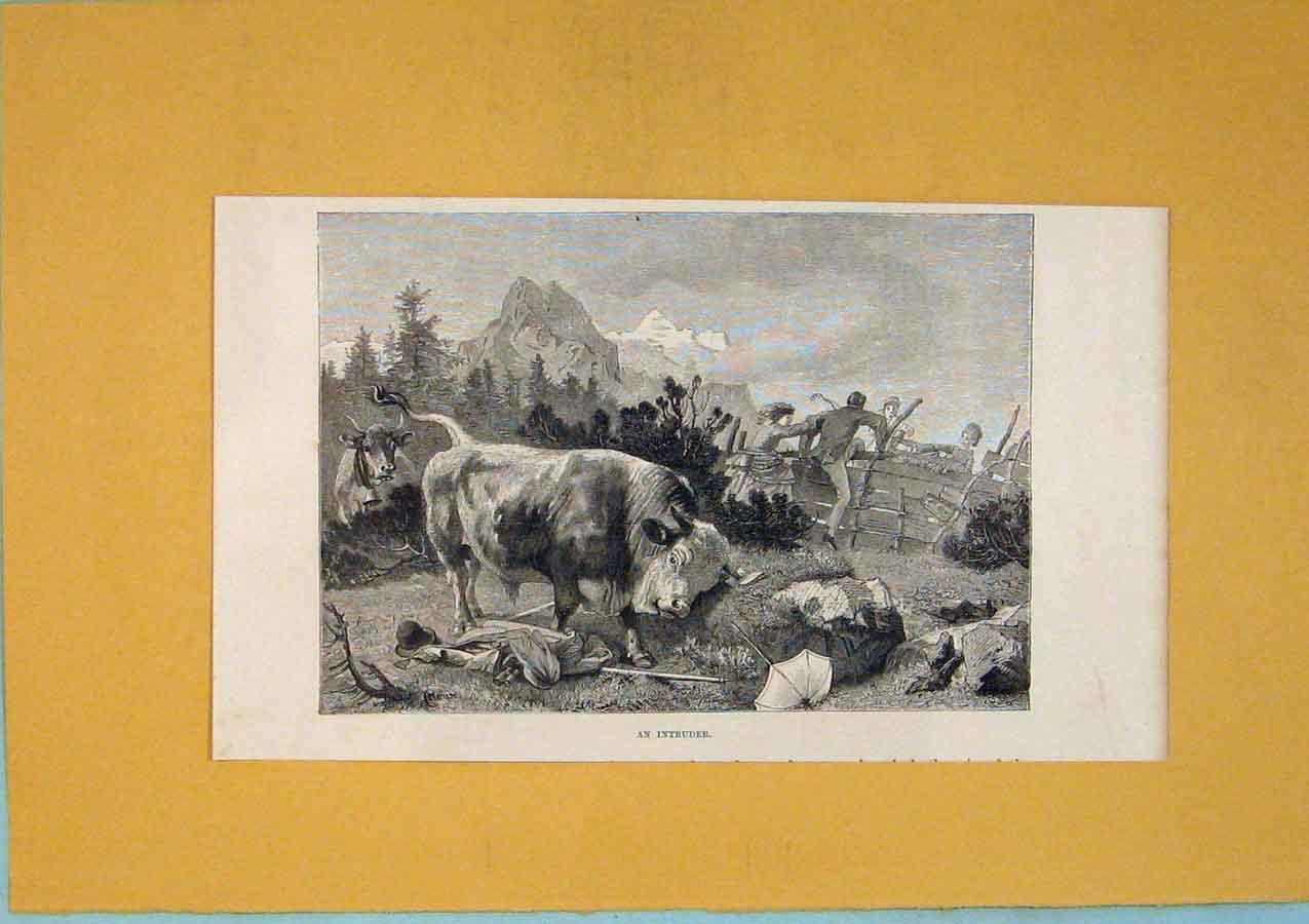 Print Intruder Bull Picnic Mountain Switzerland 286411 Old Original