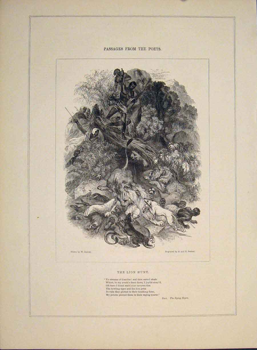 Print Lion Hunt Dying Negro Poem Poetry Poet Engraving 096421 Old Original