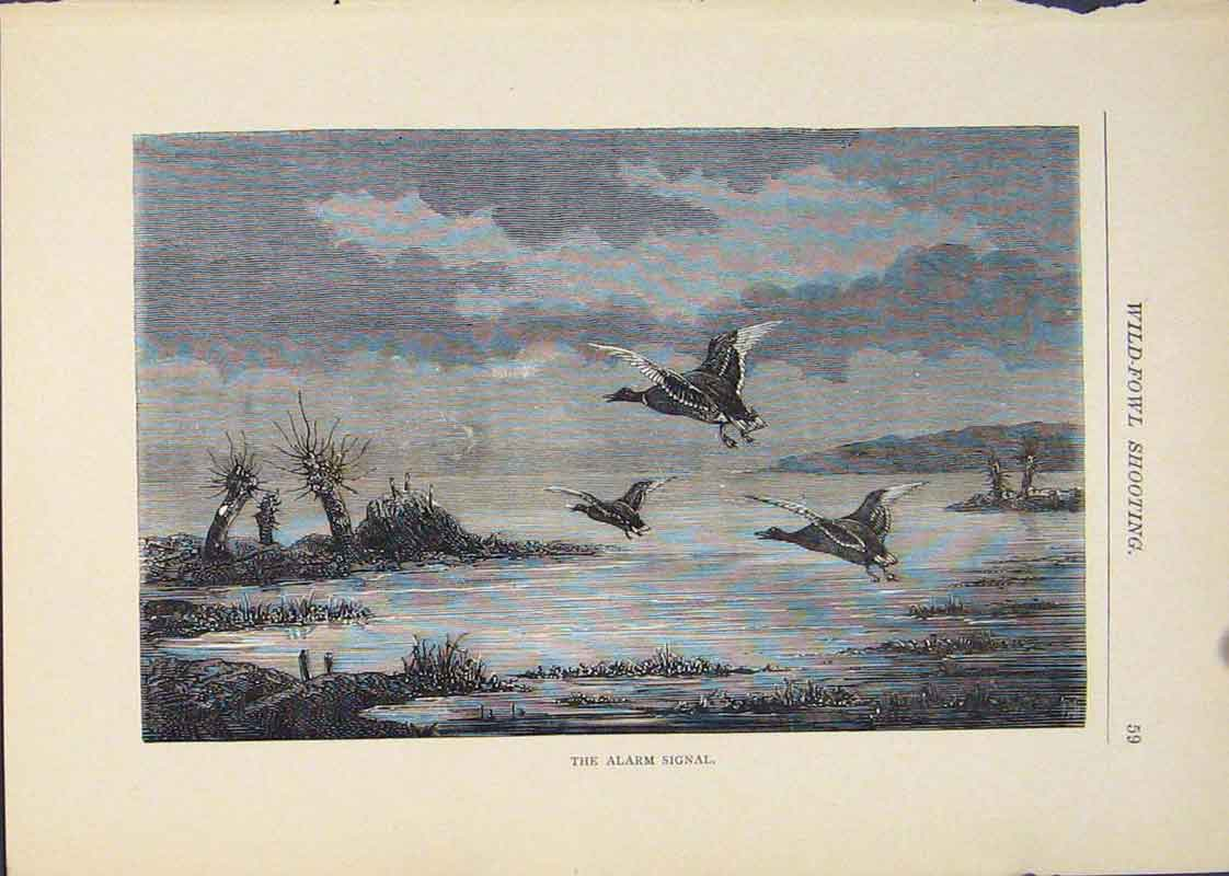 [Print Wild Fowl Bird Fowls Shooting Hunting Hunt Birds 256431 Old Original]