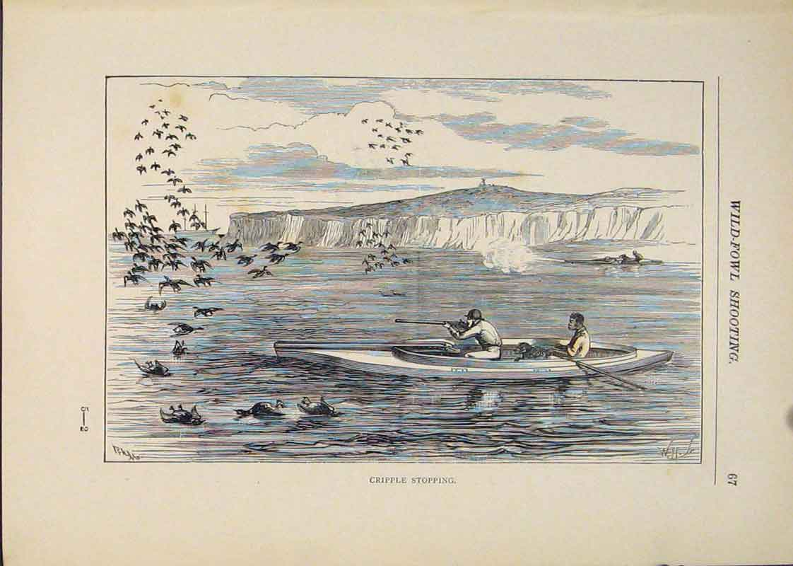 Print Cripple Stopping Wild Fowl Shooting Hunting Hunt Bird 276431 Old Original