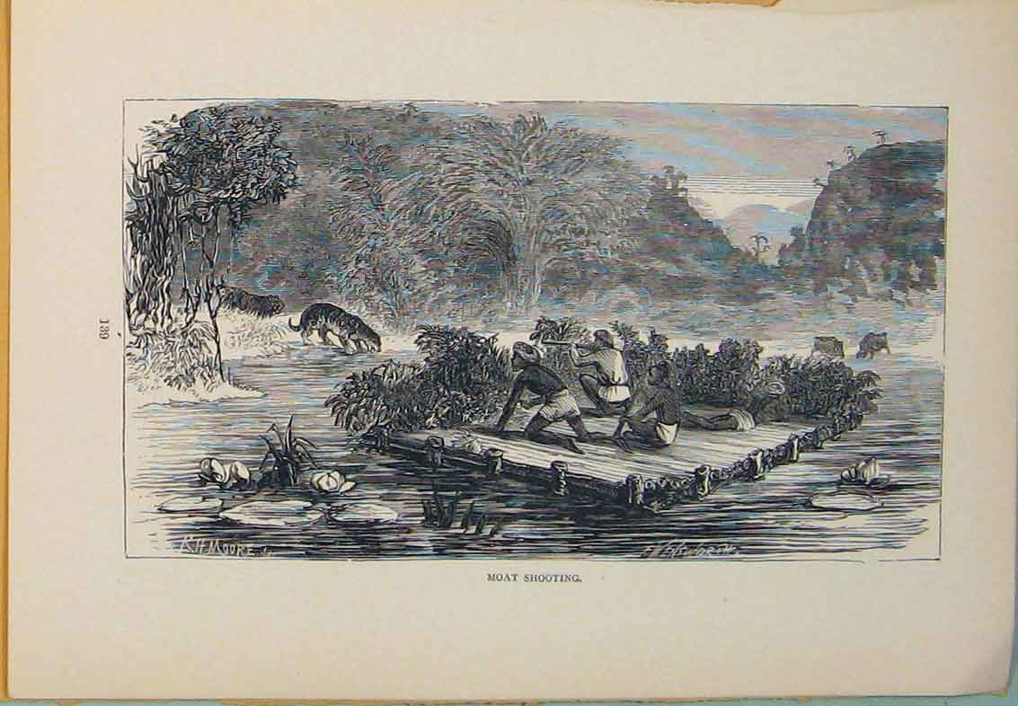 Print Moat Tiger Tigers Hunt Hunting Hunter Hunted 486431 Old Original