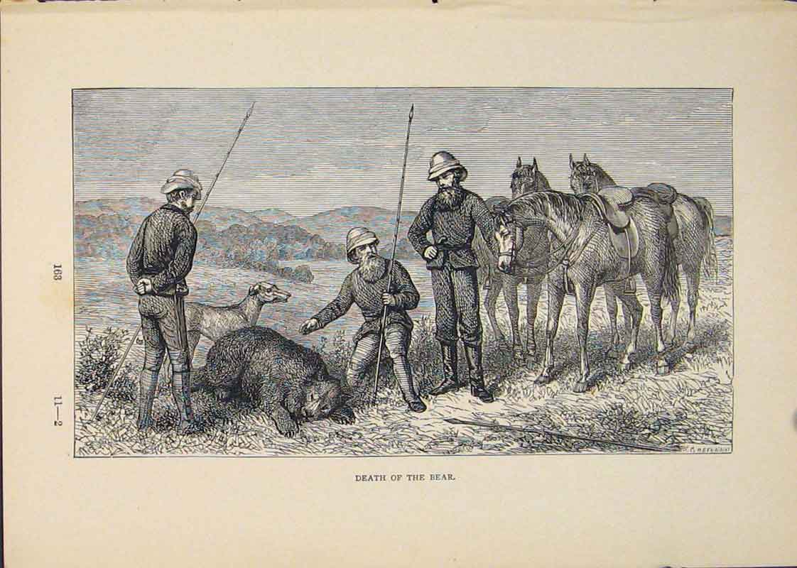 Print Bear Bears Horse Horses Hunt Hunted Hunting 556431 Old Original