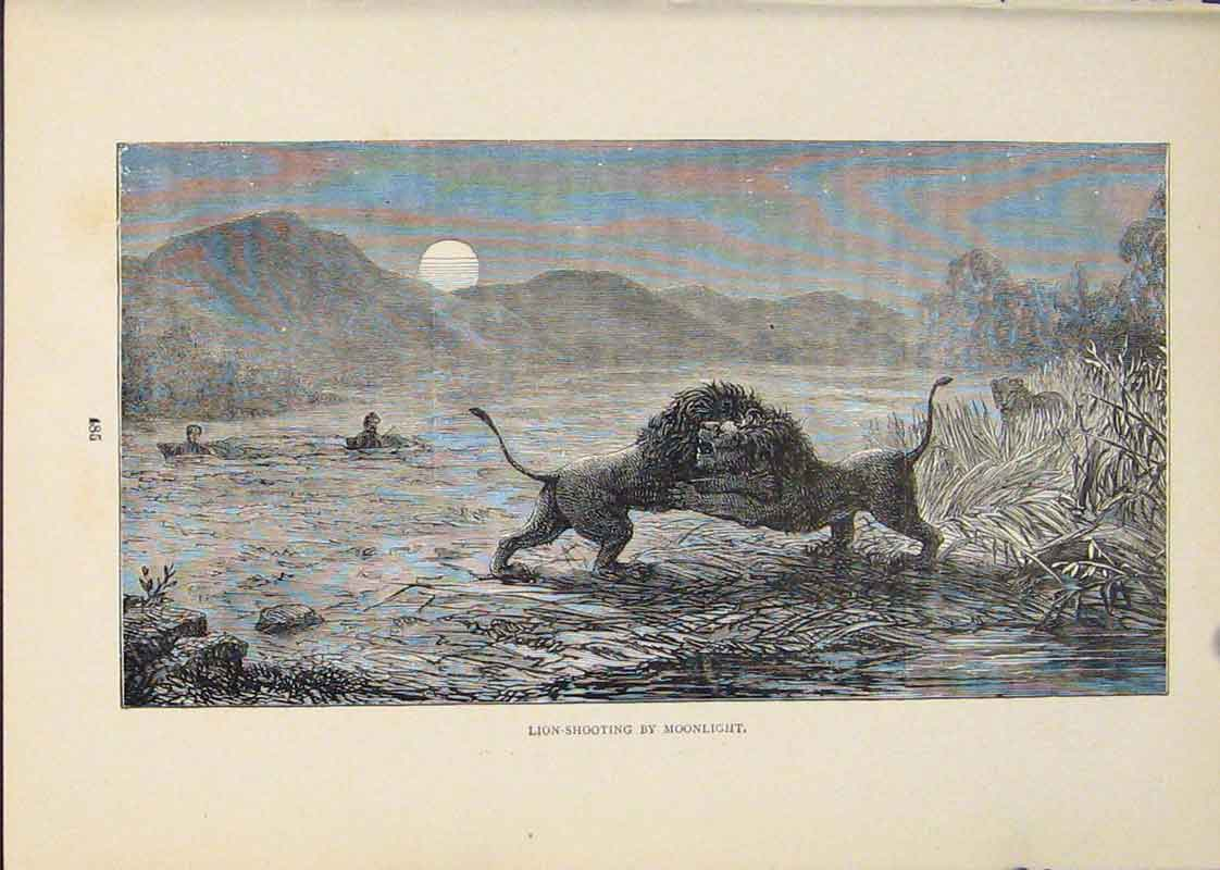 Print Lion Lions Hunt Hunting Hunter Hunted Cat Cats 256431 Old Original