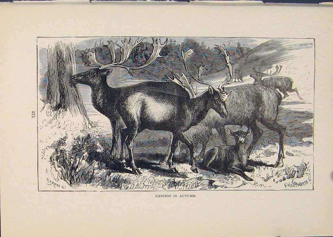 Print Cariboo Autumn Buck Bucks Animal Animals Bucks 426431 Old Original