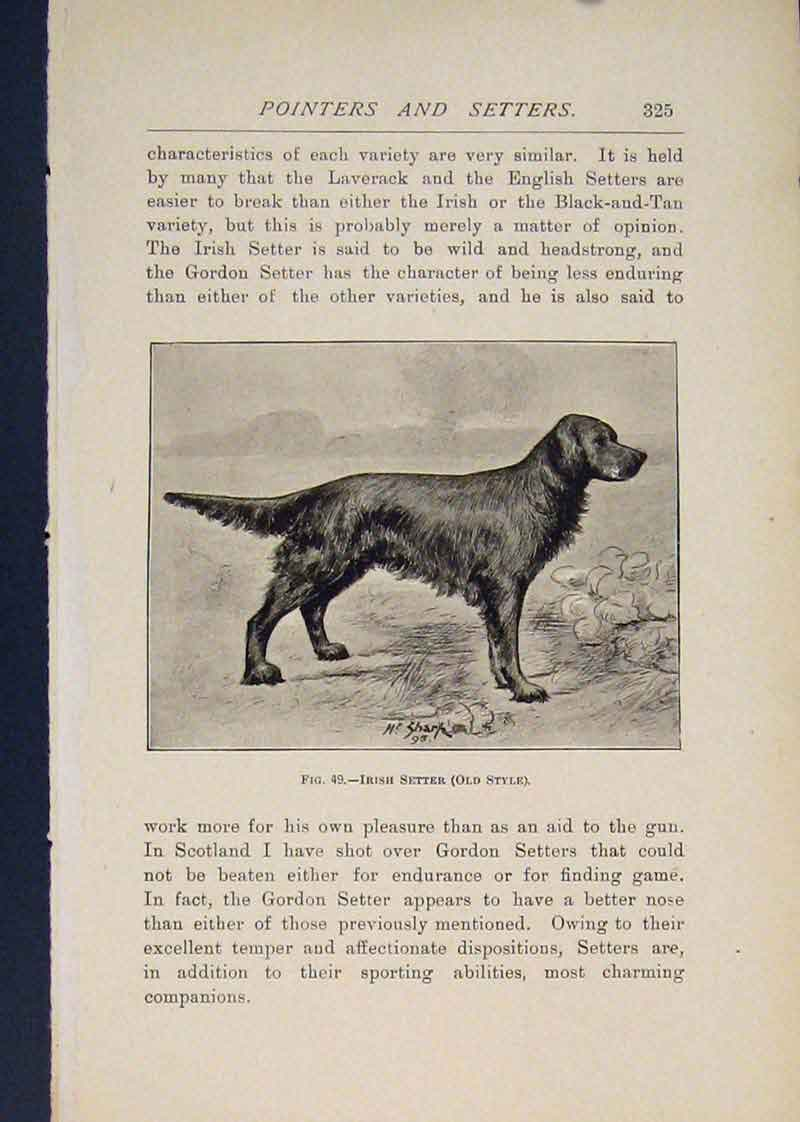 Print Pointer Pointers Dog Dogs Irish Setter 406441 Old Original