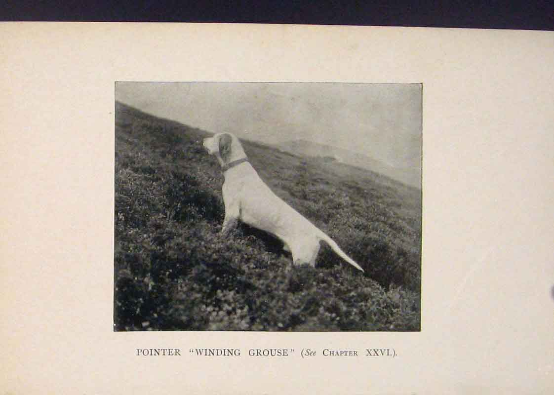 Print Pointer Winding Crouse Dog Dogs Hound Hounds 416441 Old Original
