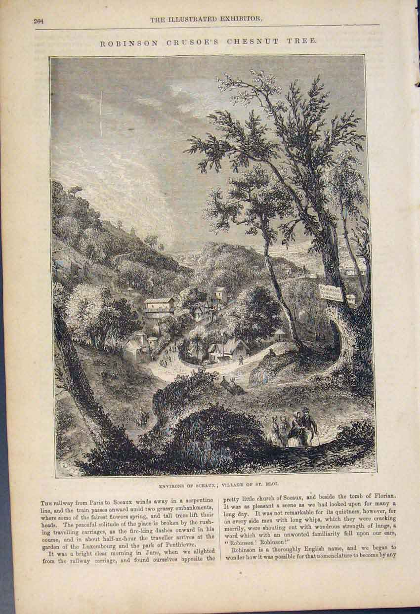 Print Chesnut Tree Evirons Sceaux St Eloi Robinsons Crusoe 64A6591 Old Original