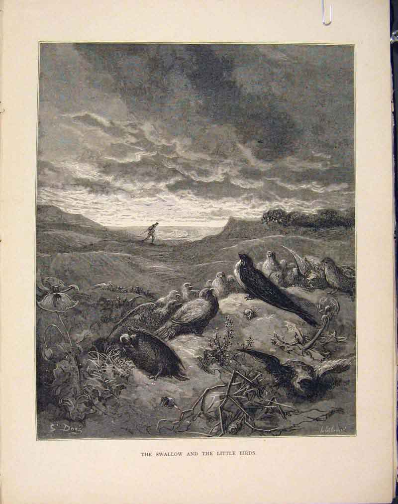 Print Swallow Little Birds Aesop Fable Viii Image 086611 Old Original