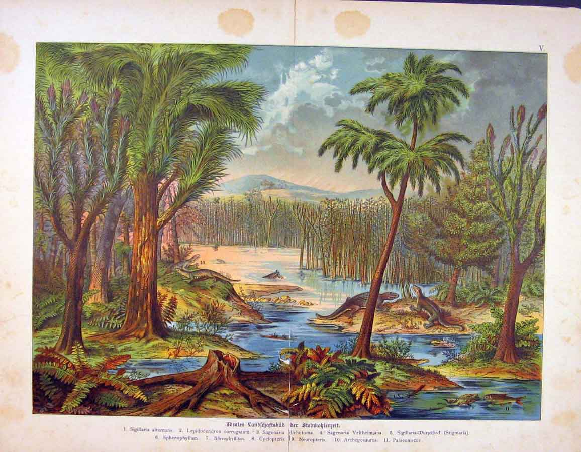 Print Crocidle Habitat Alligator Swamp Color 146681 Old Original