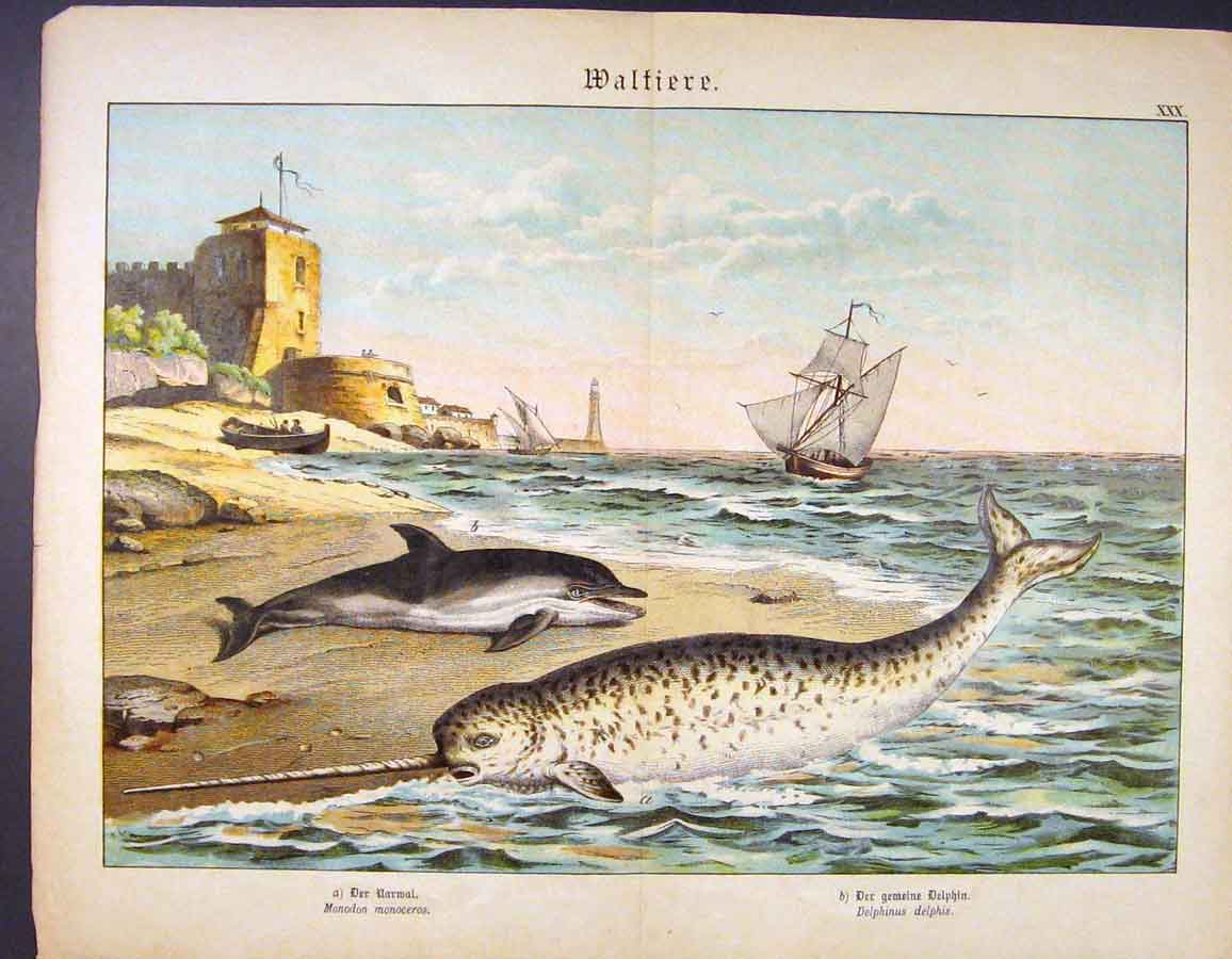 Print Dolphin Fish Sea Side Stranded Color German Art 016681 Old Original