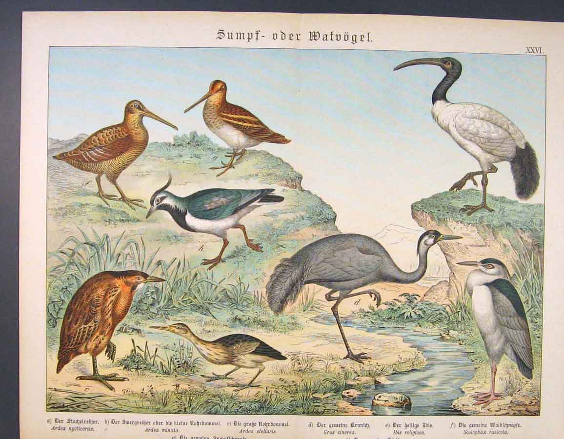 Print Water Birds Stork Duck Kingfisher Color Art 056681 Old Original