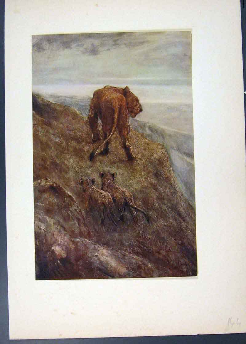 Print On The Alert Lioness And Cubs Painted By Swan 446741 Old Original