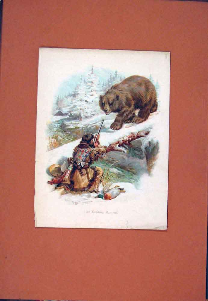 Print Colored Exciting Moment Bear Shooting 036781 Old Original