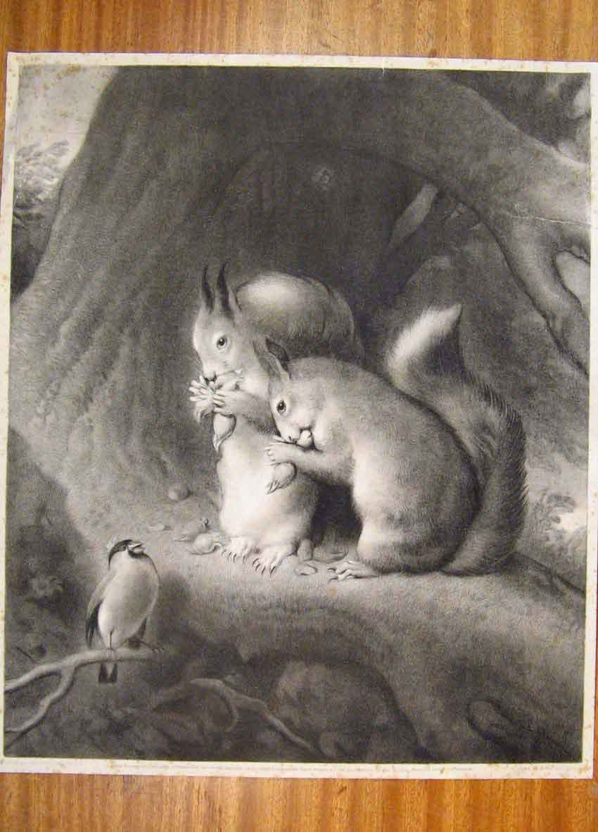 Print Landseen C1870 Squirrelfeeding Bird Nature Sketch 556811 Old Original