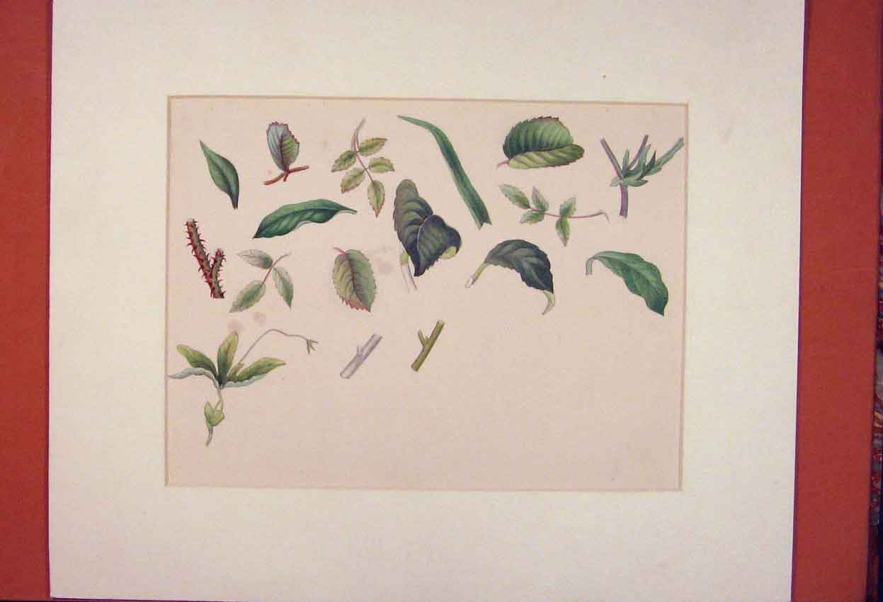 Print Leaves Leaf Flower Plant Color Painting Art 236841 Old Original