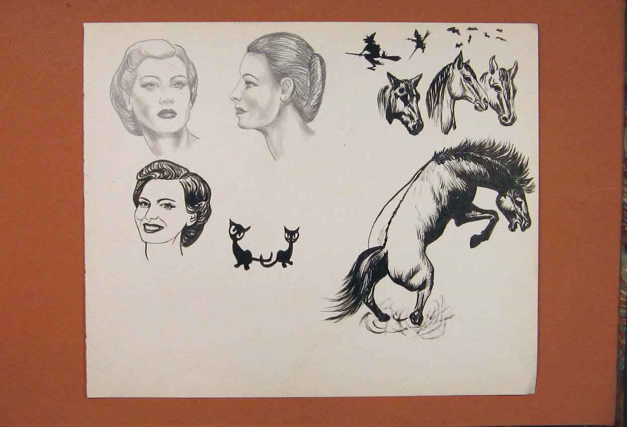Print Sketch Drawing Horse Lady Cat Animal Fine Art 526841 Old Original