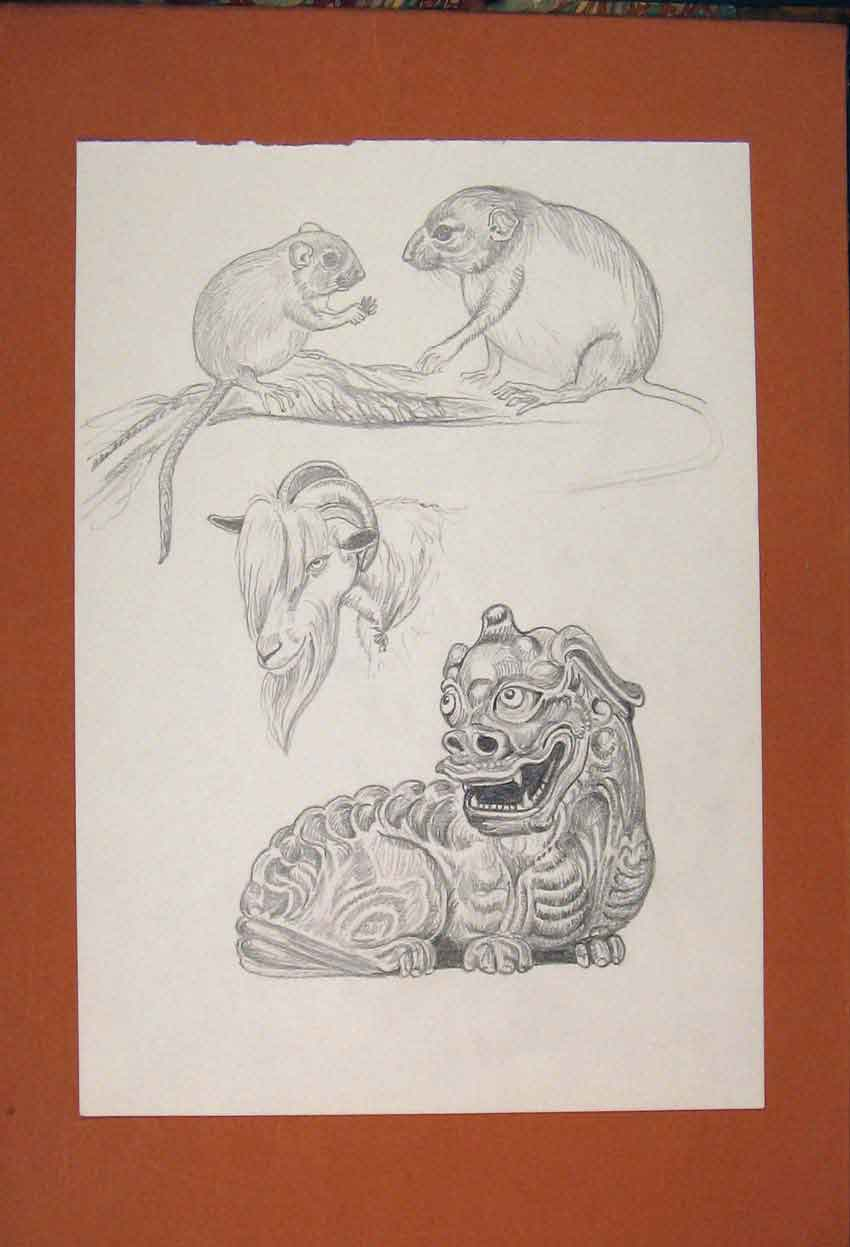 Print Dragon Bull Rat Mouse Sketching Drawing Fine Art 736841 Old Original