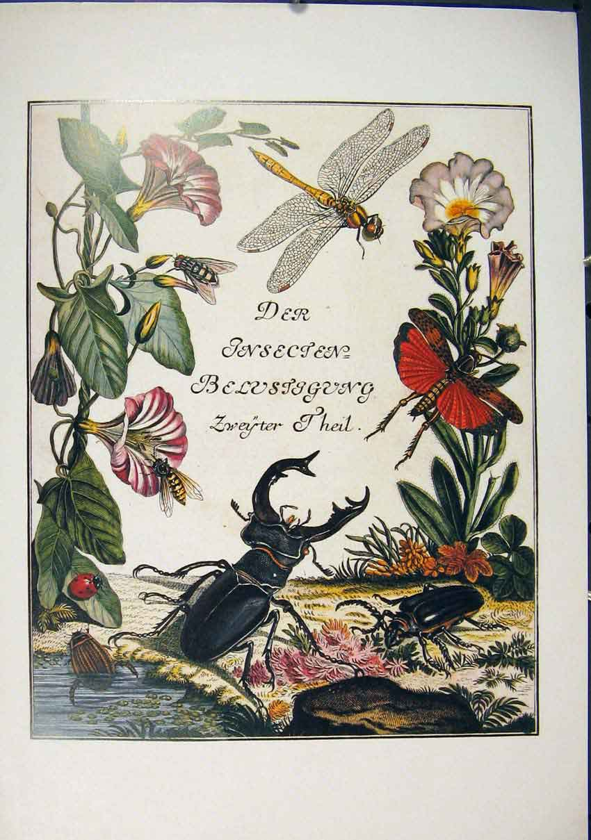 Print Apollo Butterfly Insect Catapilla Beetle Dragonfly Art 326891 Old Original