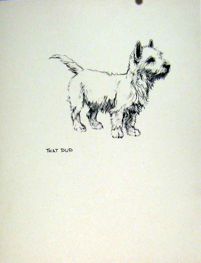 Print Pencil Sketch Dog Fine Art Hound Drawing C1936 Pet 027011 Old Original