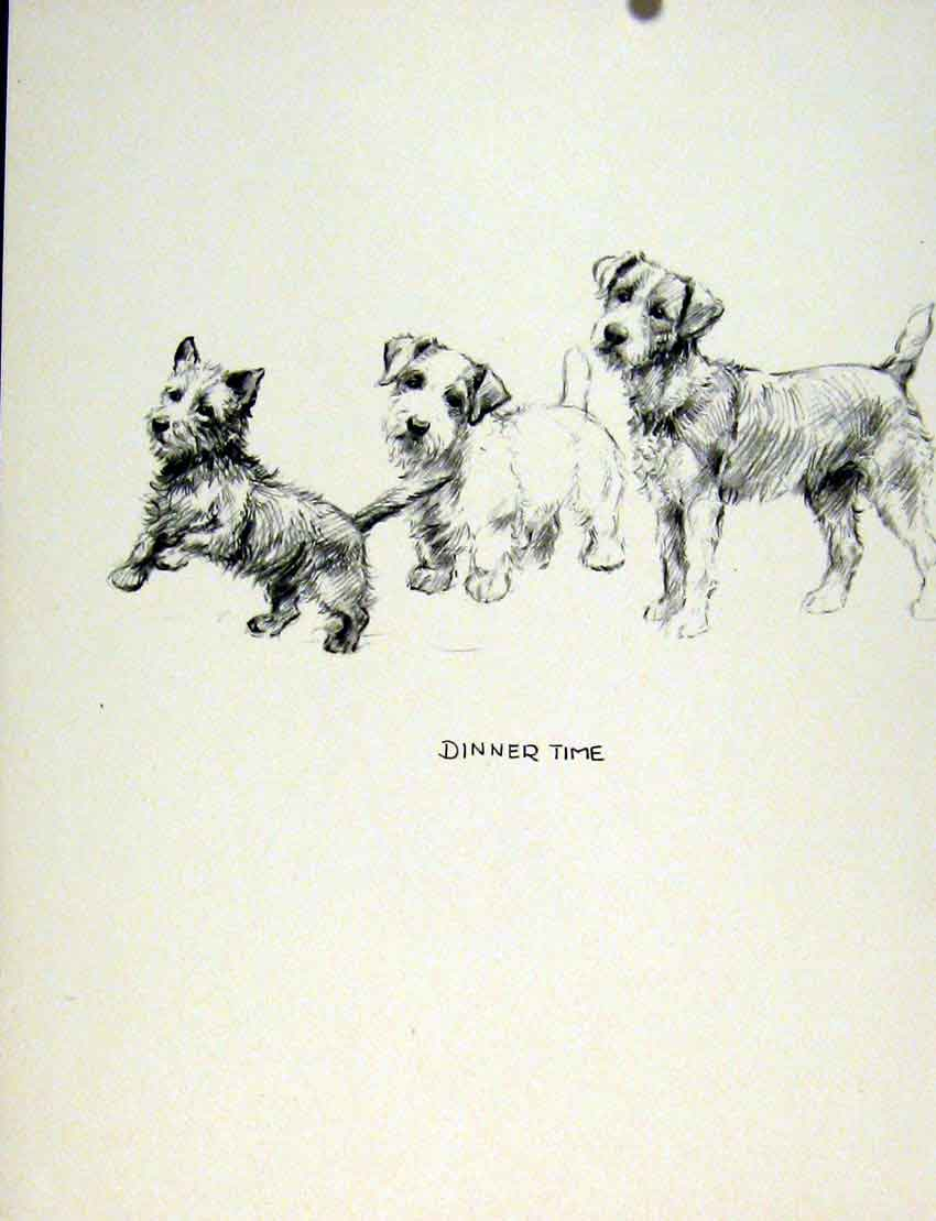 Print Dog Three Sketch Fine Art Drawing C1936 Pet Animal 047011 Old Original