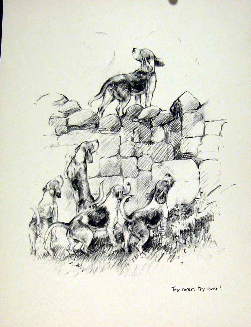 Print Dog Wall Farm Hounds Excited Sketch Drawing Fine Art 057011 Old Original