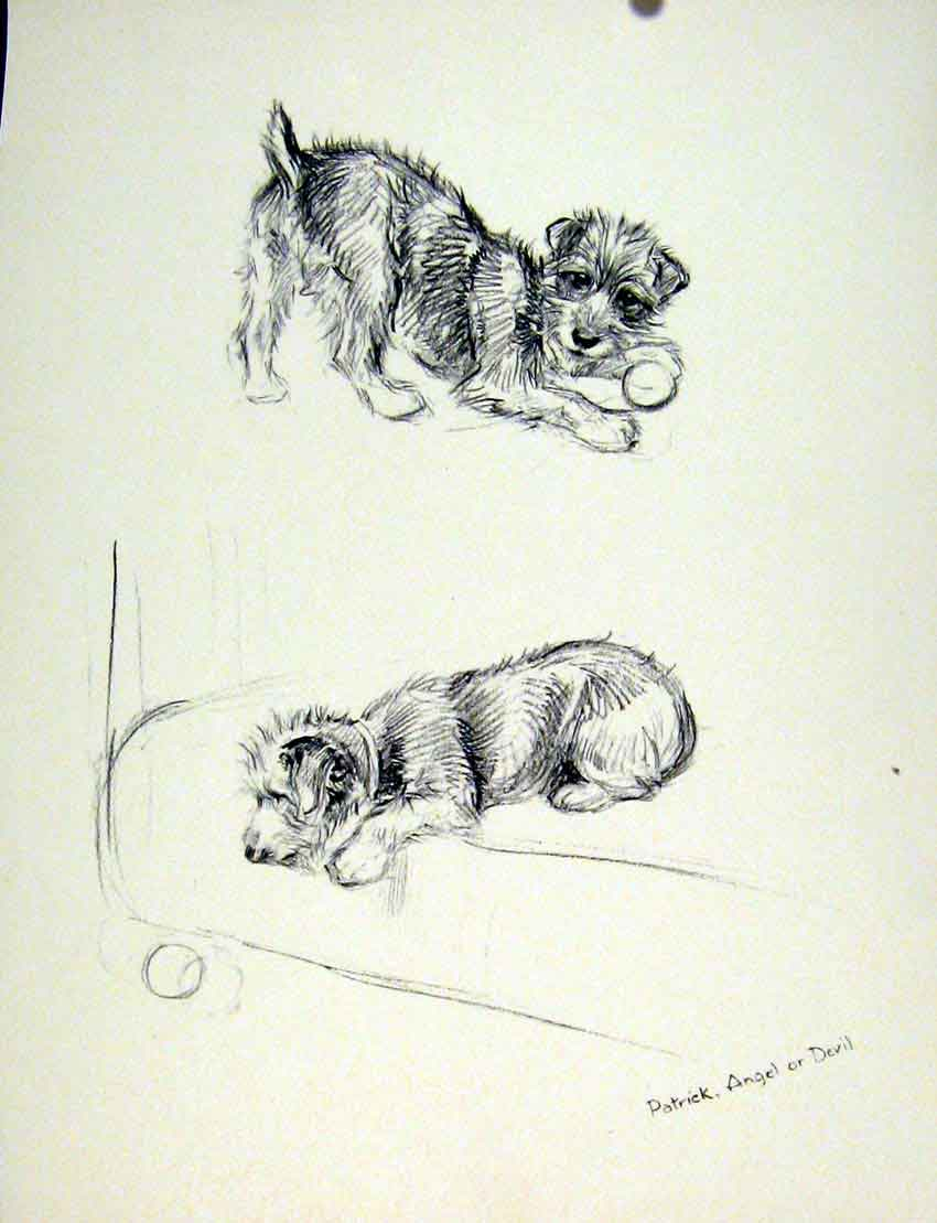 Print Playful Dog Fine Art Sketch Playing Hound Drawing Pet 067011 Old Original