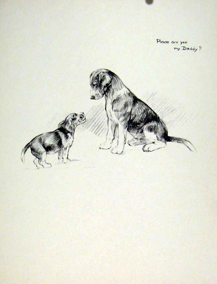Print Fine Art C1936 Sketch Dog Hound Drawing Pet Animal 107011 Old Original