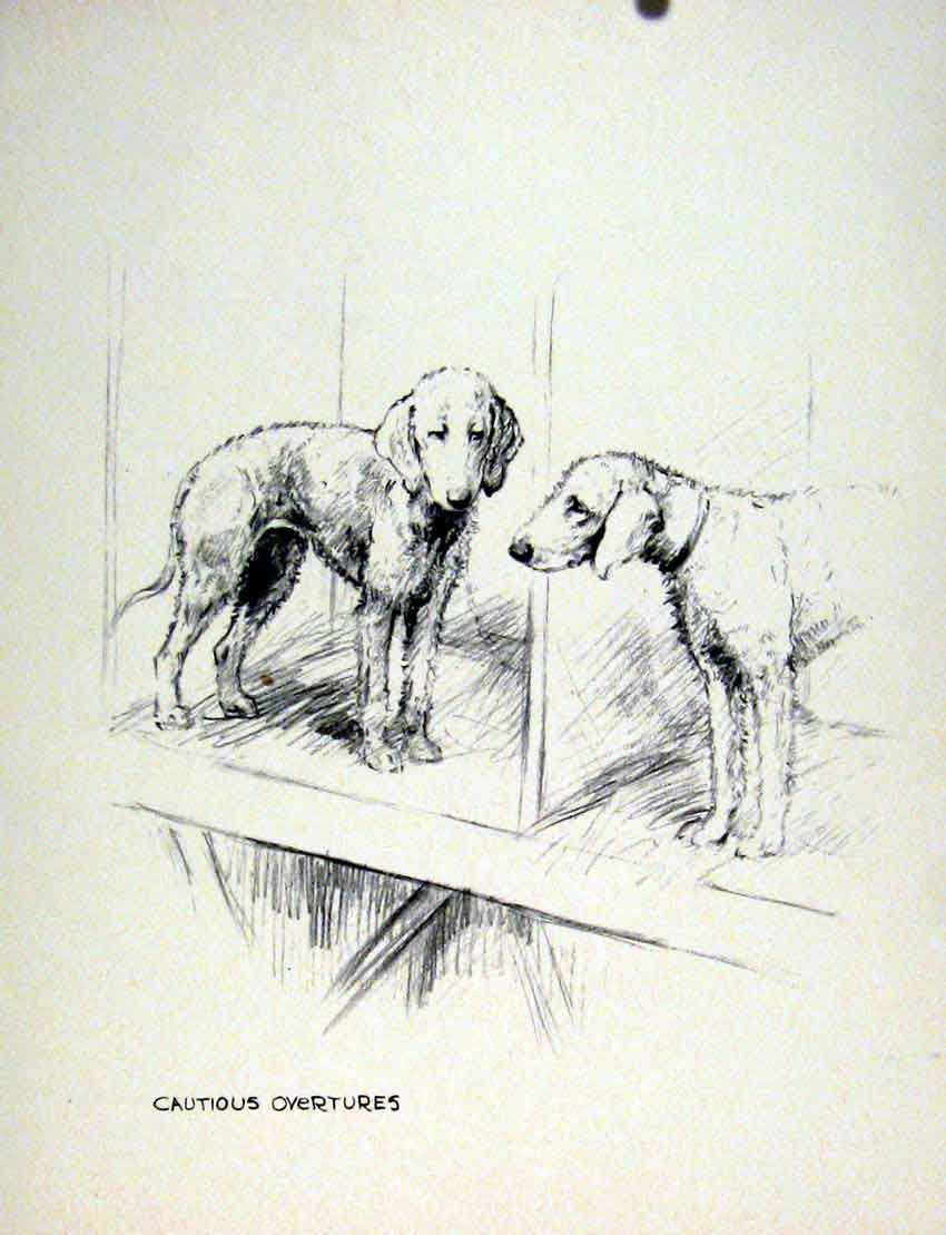Print Hound Pencil Sketch Dog Drawing Fine Art Pet Animal 127011 Old Original