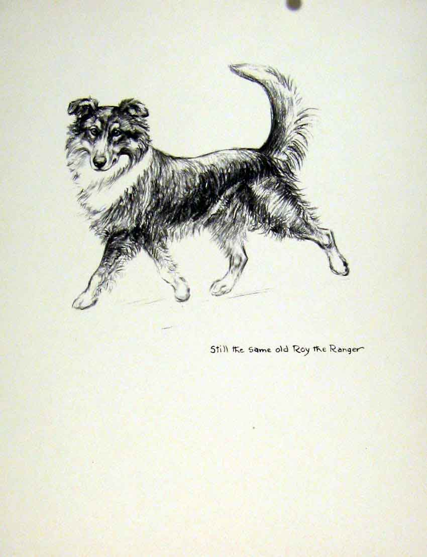 Print Art C1936 Lassie Dog Hound Pencil Sketch 167011 Old Original