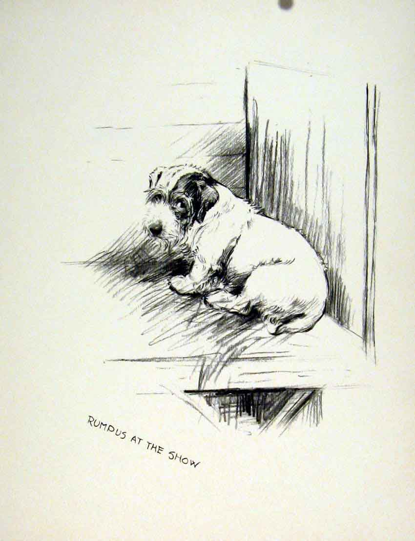 Print Show Day Dog Pencil Sketch Fine Art Drawing C1936 217011 Old Original