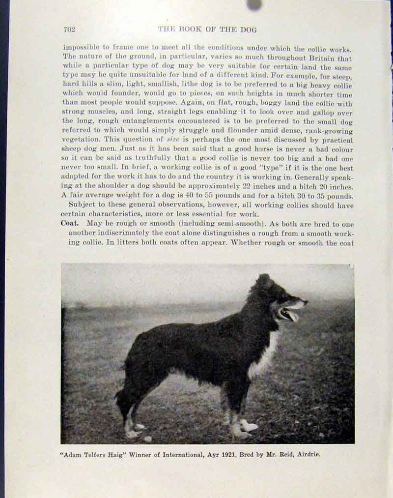 Print Dog Winner International Ayr Telfers Haig C1940 397101 Old Original